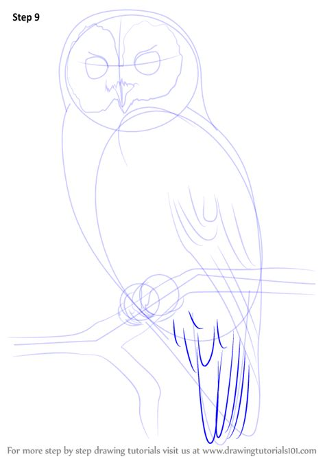Learn How to Draw a Tawny Owl (Owls) Step by Step
