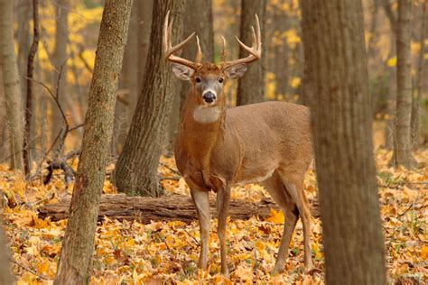 Mississippi Woman Bags 2 Deer With 1 Shot at 101 Years Old
